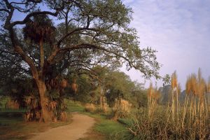 Middleton Plantation